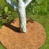 Приствольный круг Ø 19 см EuroCocos из кокосового волокна