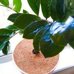 Приствольный круг Ø 22 см EuroCocos из кокосового волокна